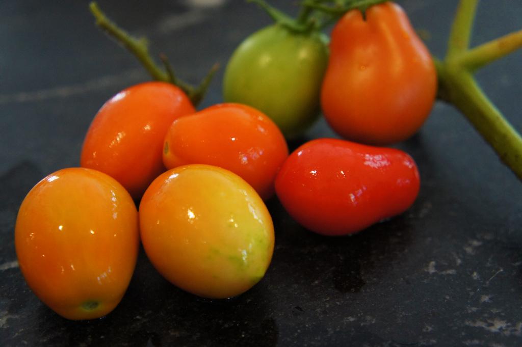backyard grown tomatoes