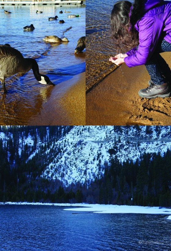 beautiful images of lake tahoe